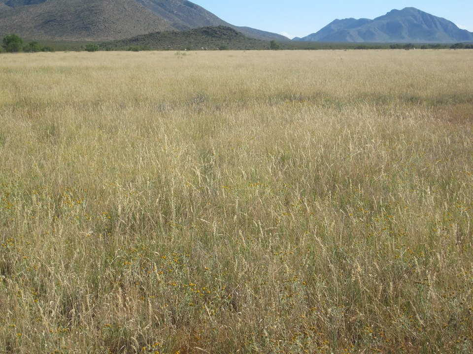 Mexico - restored grassland - photo: Alejandro Carrillo