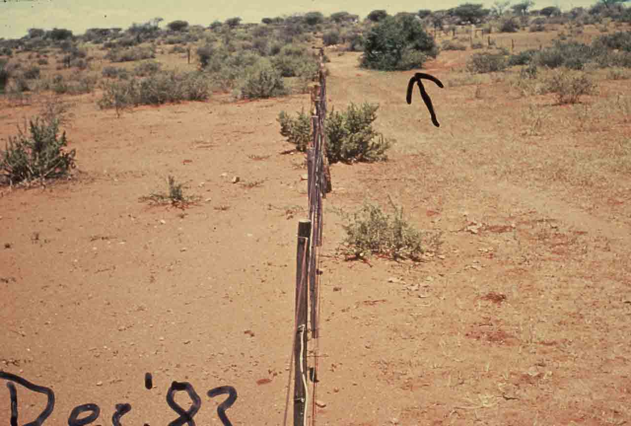 Namibia - parched land