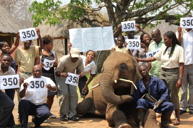 350 Event photo with Dojiwe the elephant
