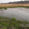 New, year-round surface water on Dimbangombe River in Zimbabwe.