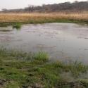 New, year-round surface water on Dimbangombe River in Zimbabwe.