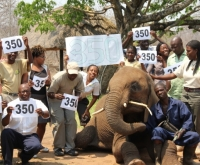 350 Event photo with Dojiwe the elephant